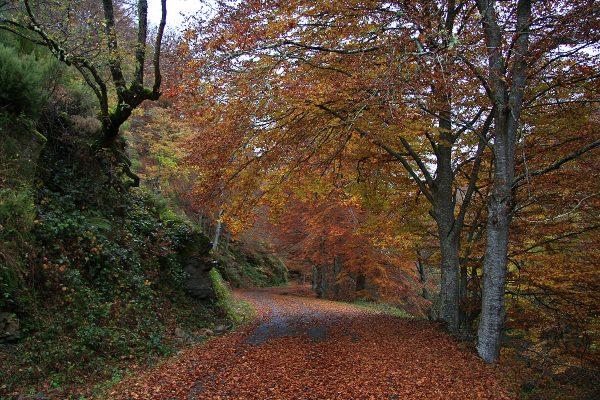 "La carretera que lleva a ""El Rajao"" en otoño"