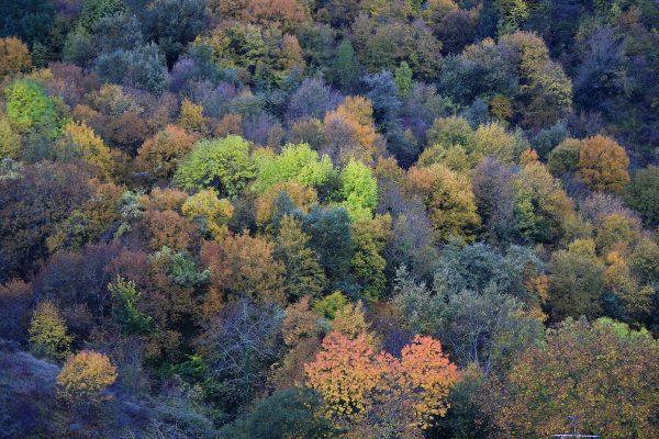 Colores de otoño en la falda de Peña Tobía