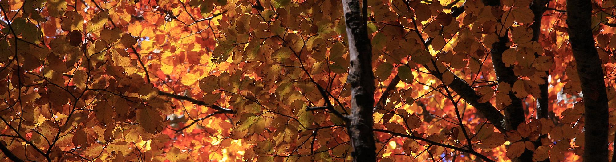 tobia-hojas-rojas-2