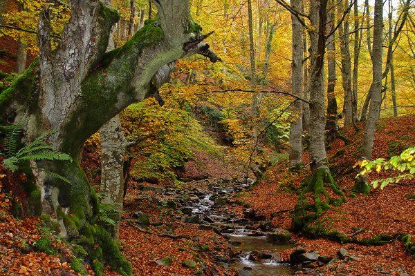 """El otoño realza la belleza de """"El Rajao"""""""