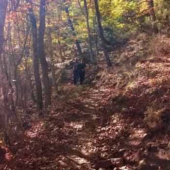 Caminando por el bosque.