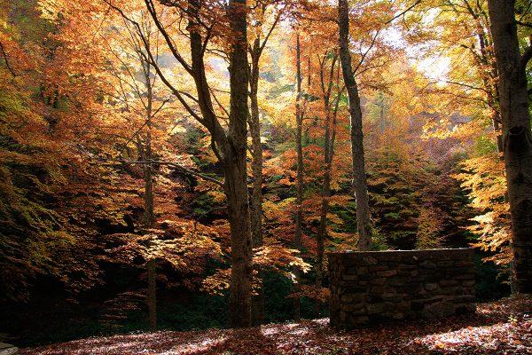 La luz del otoño es mágica en El Rajao