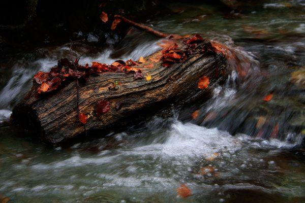 Notas de color en el río Tobía